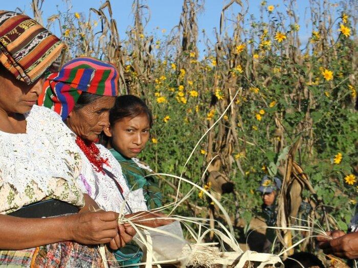 donne al lavoro in un campo
